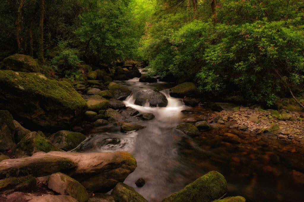 Serene forest river